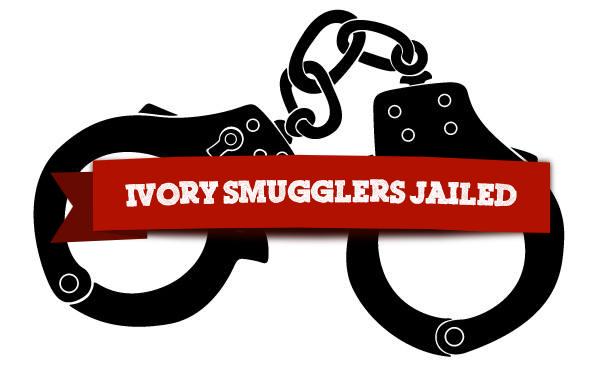 vfapu-ivory-smugglers